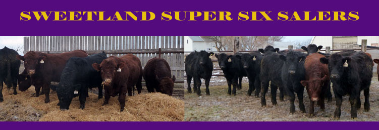 Sweetland Super Six Salers - Complete Herd Dispersal October 21&22